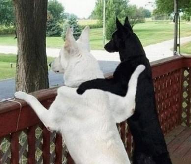 兄弟们,对于普通人来说,怀着美好的感情谈论兄弟之间的友谊是不可理解的。