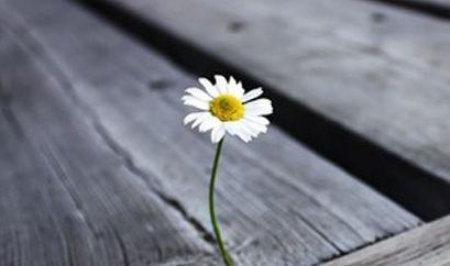 悲伤的个性倾诉空有些事情之间的动态总是要经历才能理解痛苦