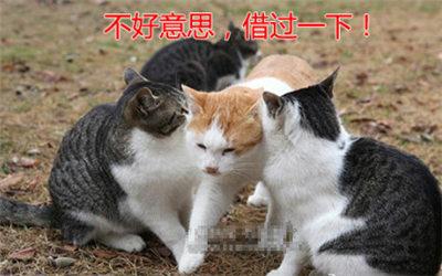 七夕单身趣谈2018七夕情人节即将来临