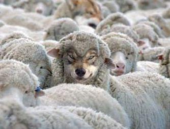这本图画书的最新版本不是害怕披着羊皮的狼,而是害怕披着羊皮的狼。  生活一度可能不太好