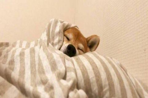 微信不想早上起床,而且很冷,它说冬天已经很冷了。